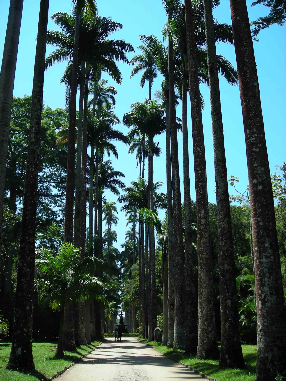Jardim Botânico - Natureza