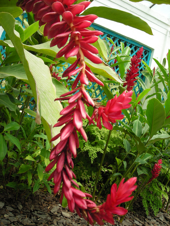 Flor no Jardim Botânico do Rio