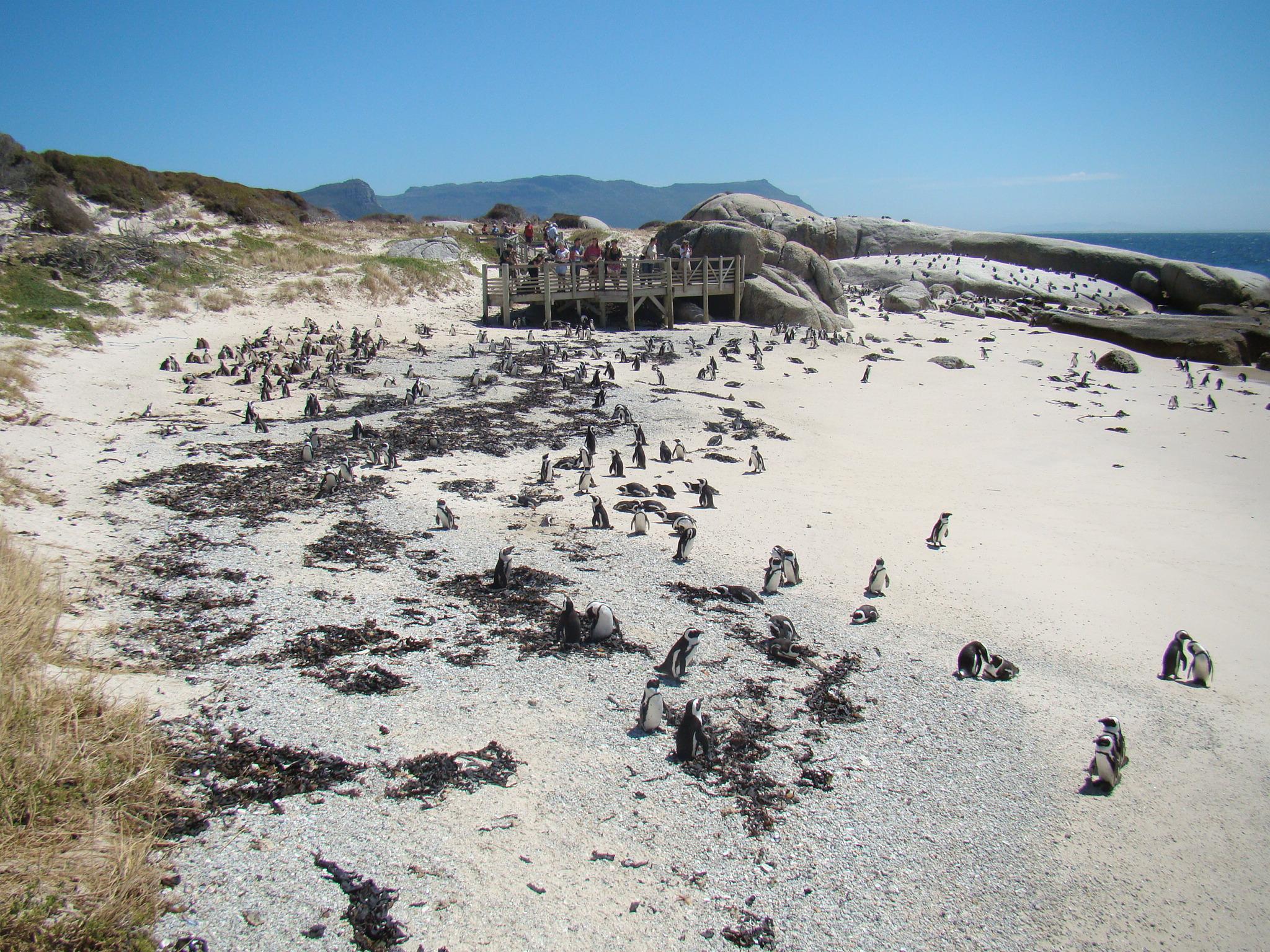 peninsula do cabo