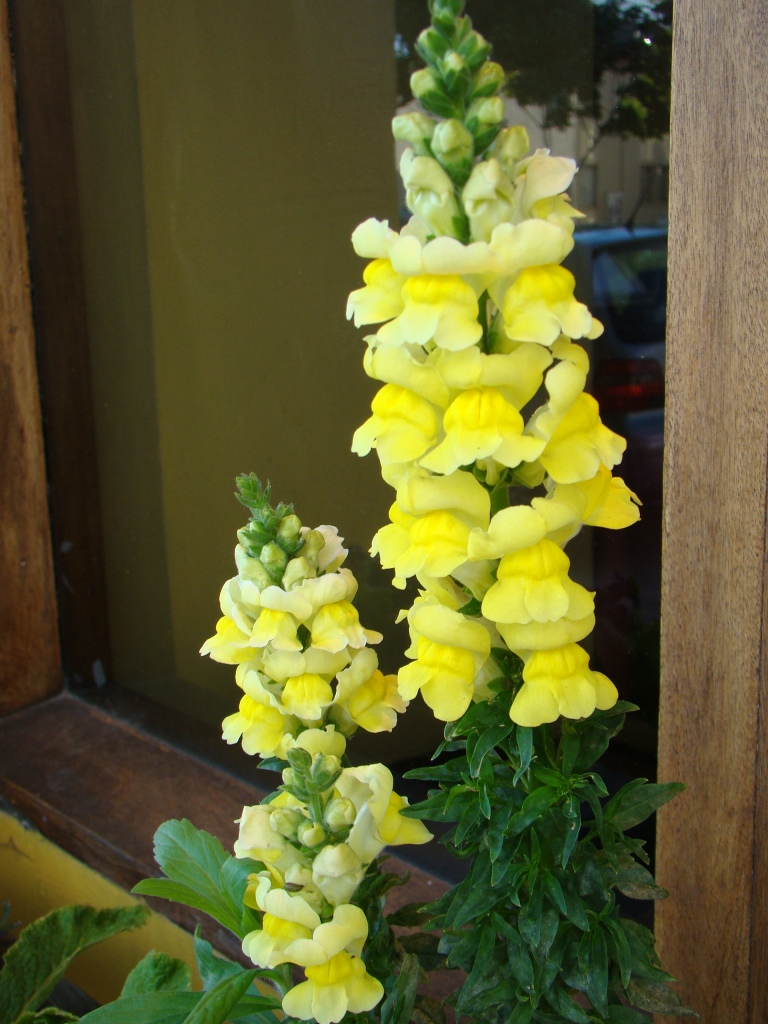 Flores em Berkeley, California
