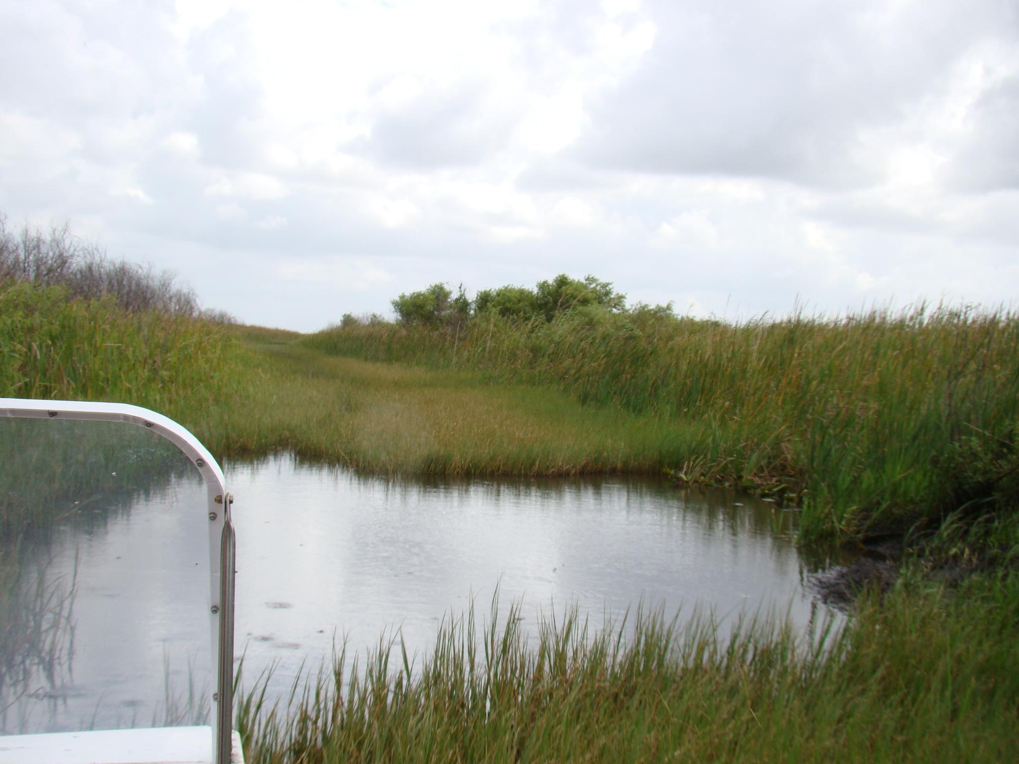 Vegetação do Everglades