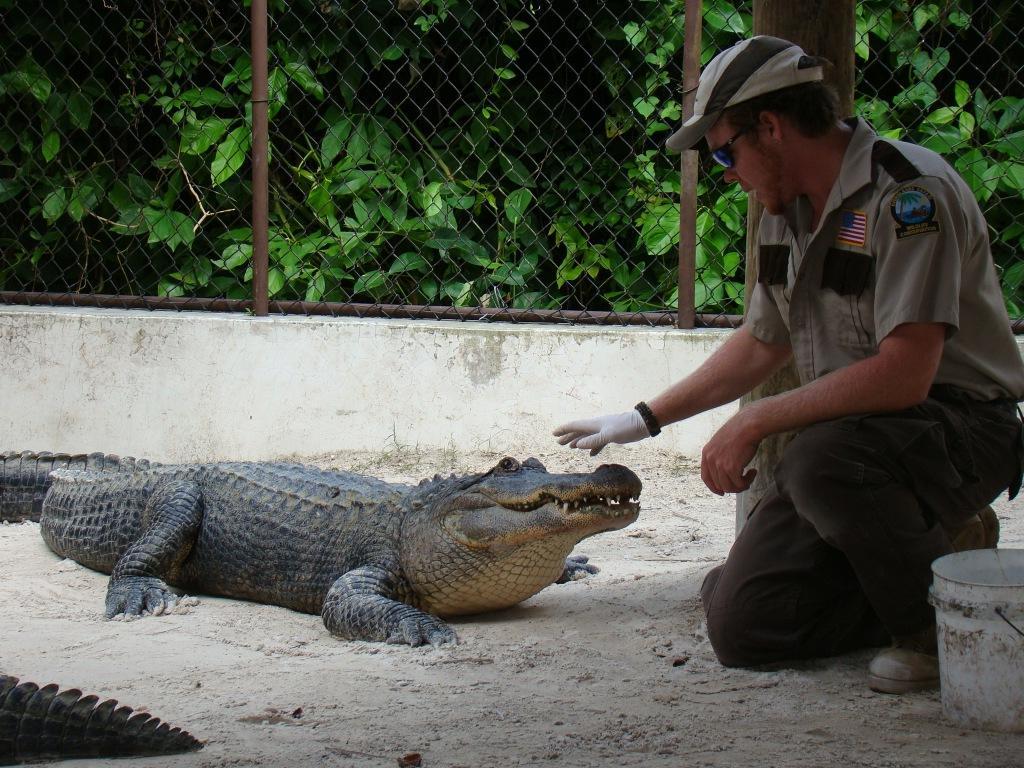 Show dos Jacarés - Everglades