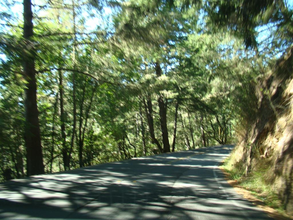 Muir Woods - Highway