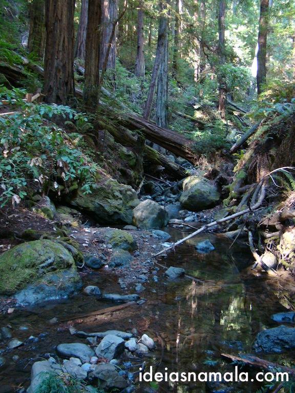 Detalhe no Muir Woods